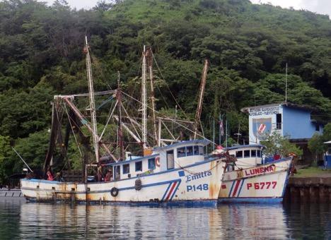 Cachalote encontrado encallado en Playa Costa de Oro