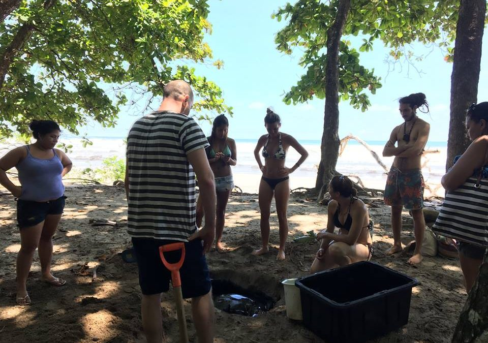 Iguana Divers guys and Santa Teresa residents help to rescue a Hawksbill sea turtle