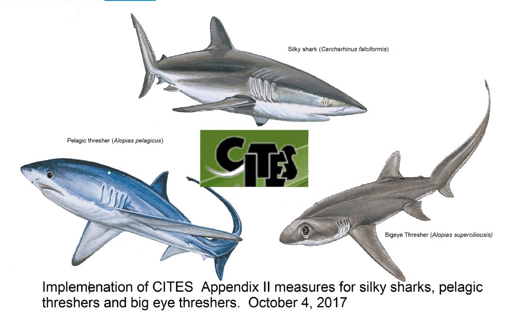 CITES regulations for silky sharks entered into force yesterday