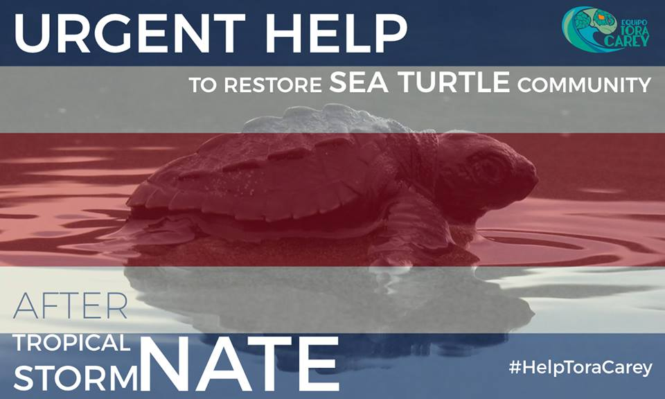 URGENT HELP TO RESTORE SEA TURTLE COMMUNITY